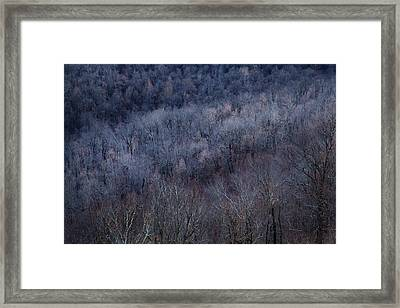 Ozark Trees #3 Framed Print