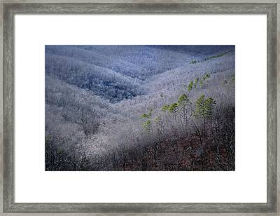 Ozarks Trees #4 Framed Print