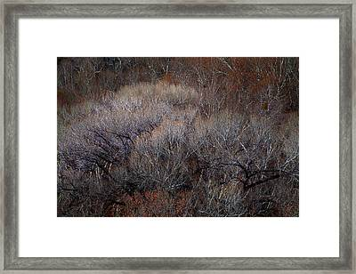 Ozarks Trees #5 Framed Print