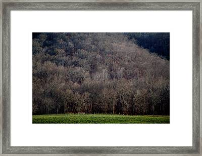 Ozarks Trees Framed Print