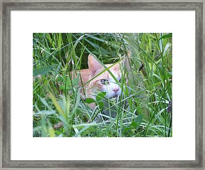 Ozzy Framed Print by Jessica Burgett