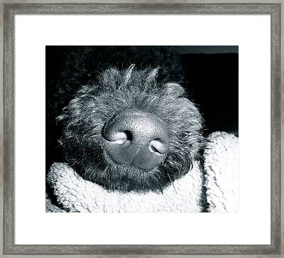 Bodhi Nose Framed Print by Gallery Messina