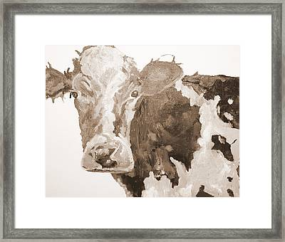Pa Cow Study 1 Framed Print by Quinton Chapman