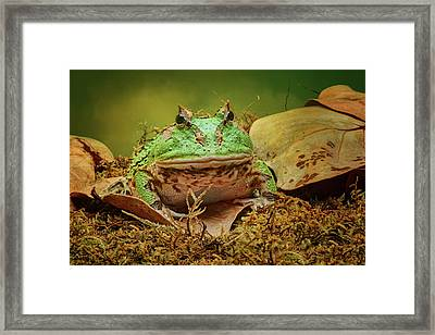 Pac Man - Frog Framed Print by Nikolyn McDonald
