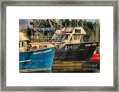 Pacific Banker And Royal Viking Framed Print by Adam Jewell