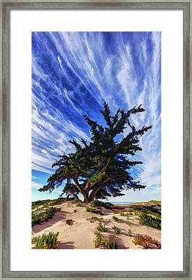 Pacific Beach Juniper Framed Print by ABeautifulSky Photography