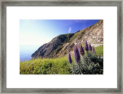 Pacific Coast View With Blue Wildflowers Framed Print by George Oze