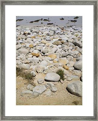 Pacific Grove, Ca Framed Print by Anne