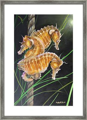 Pacific Lined Seahorse Trio Framed Print by Phyllis Beiser