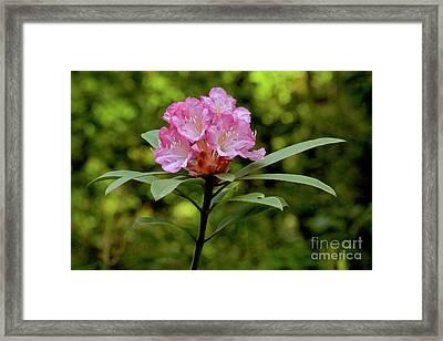 Pacific Northwest Spring Framed Print