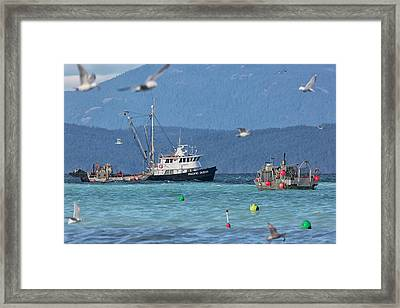 Framed Print featuring the photograph Pacific Ocean Herring by Randy Hall