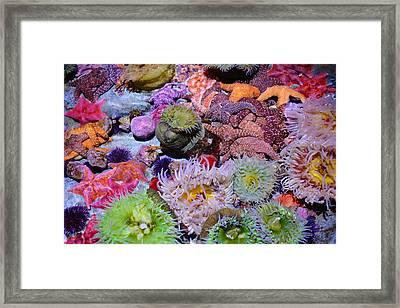 Pacific Ocean Reef Framed Print by Kyle Hanson