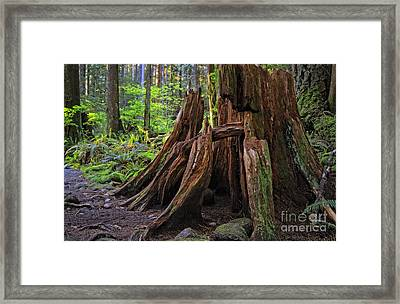 Pacific Rainforest Old And New Framed Print by Charline Xia