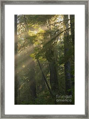 Pacific Rim Misty Sunbeams Framed Print by Adam Jewell