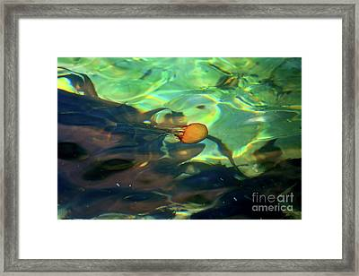 Framed Print featuring the photograph Pacific Sea Nettle Jellyfish by Susan Wiedmann