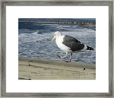 Pacing Framed Print