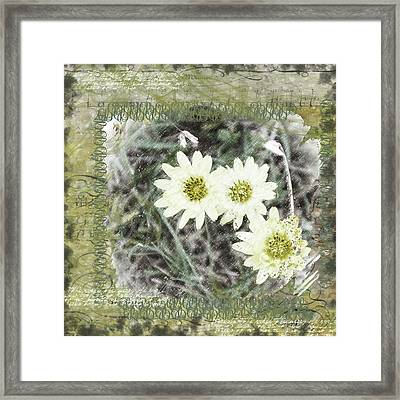 Package Of Three Framed Print by Nadine Berg