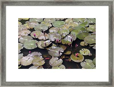 Pad In Town Framed Print by Jez C Self