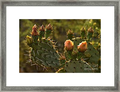 Paddle Cactus Blooms Framed Print