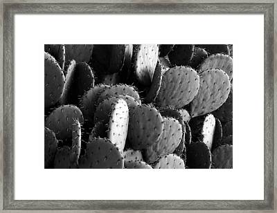 Paddled Framed Print by Steve Russell