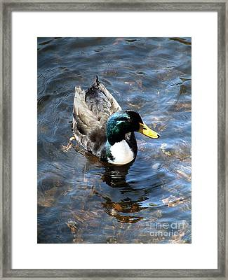 Framed Print featuring the photograph Paddling Peacefully by RC DeWinter