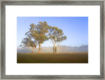 Paddock Sunrise Framed Print by Mike  Dawson