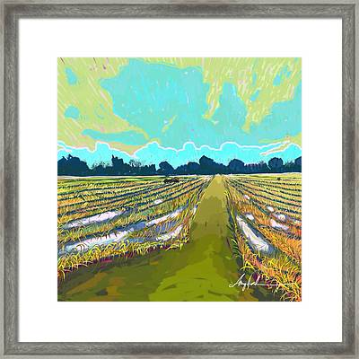 Paddy Field In Impressionism  Framed Print