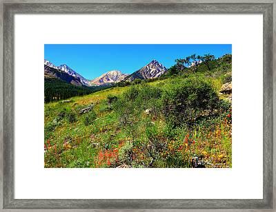 Pahsimeroi Wildflowers Framed Print