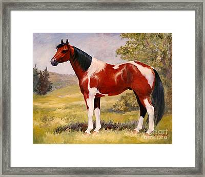 Paint Horse Gelding Portrait Oil Painting - Gizmo Framed Print by Kim Corpany