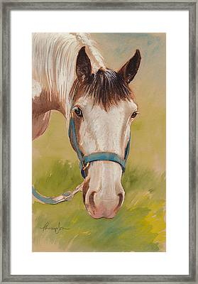 Paint Horse Pause Framed Print by Tracie Thompson