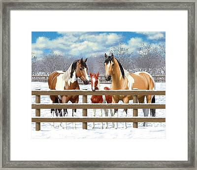 Paint Horses In Winter Corral Framed Print