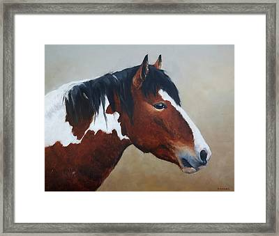 Paint Stallion Framed Print