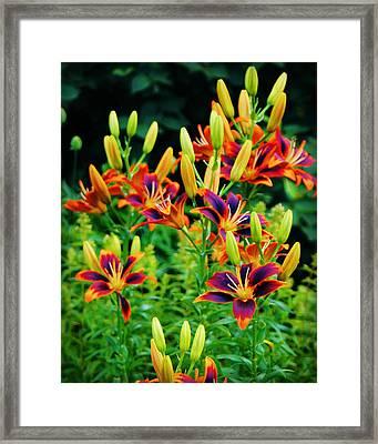 Paintbox Lillies Framed Print by Carol Toepke