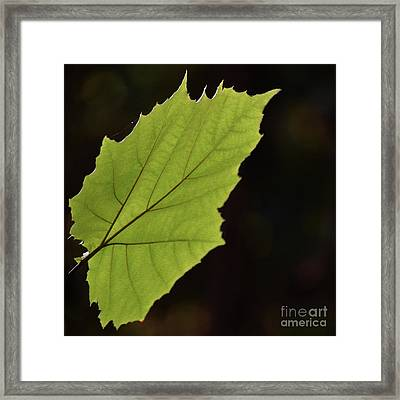 Painted And Delicately Entangled Framed Print