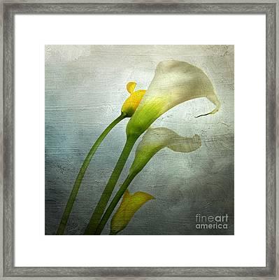 Painted Arum Framed Print