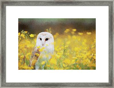 Painted Barn Owl Framed Print by Ericamaxine Price