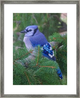 Painted Blue Jay  Framed Print by Thomas  MacPherson Jr