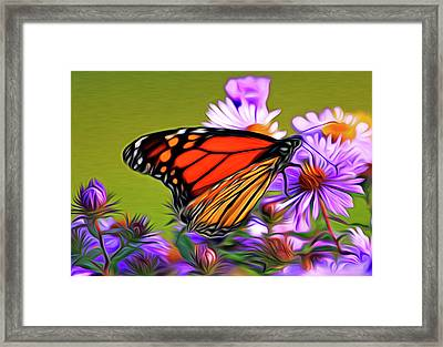 Painted Butterfly Framed Print by David Kehrli