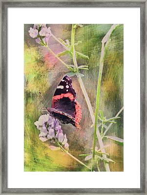 Painted Butterfly Framed Print by James Steele