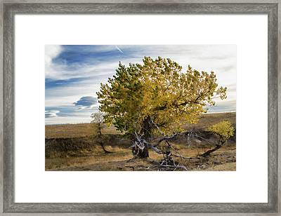 Painted By Nature Framed Print