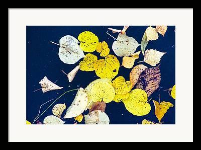 Tablou Photographs Framed Prints