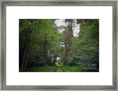 Painted Coming Out Framed Print