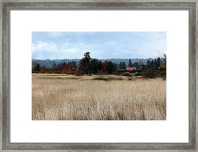 Painted Cows Framed Print by Barbara  White