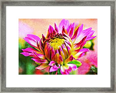 Painted Dahlia Framed Print by Clare Bevan