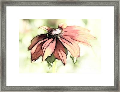 Painted Daisy Framed Print by Teresa Zieba