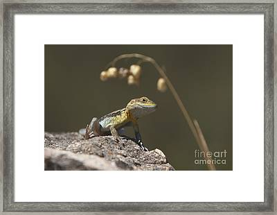 Painted Dragon Framed Print by Bill Robinson