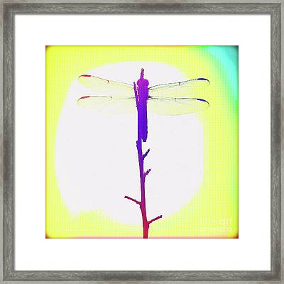 Painted Dragonfly IIi Framed Print by Chris Andruskiewicz