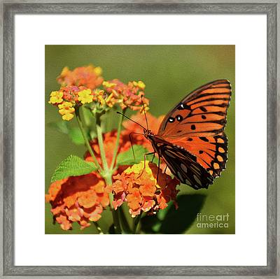 Painted Fall Colors Framed Print