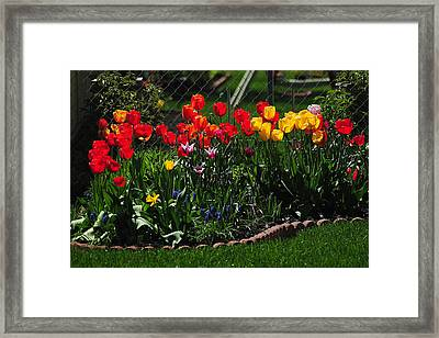 Painted Flowers Framed Print by Frozen in Time Fine Art Photography