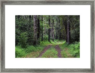 Painted Forest Fantasy Framed Print